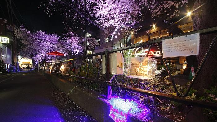 桜並木のライトアップ